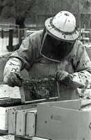 Checking the HIve