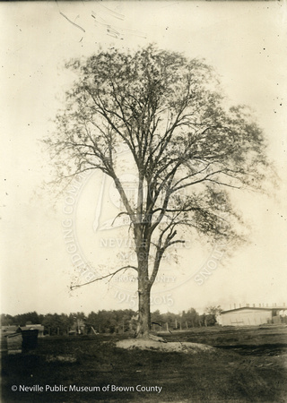 Fort Howard Elm Tree